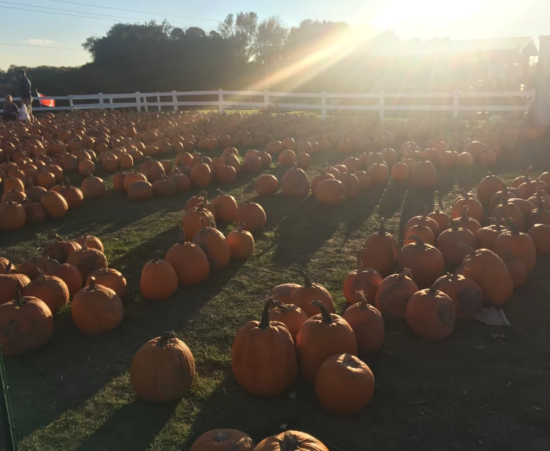 Pumpkins are displayed in rows organized by size on October 9th, 2016 at The Elegant Farmer in Mukwonago.