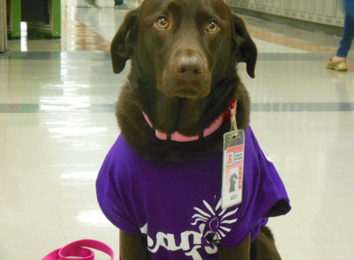 Formar Arrowhead service dog Abby volunteered at Arrowhead for over five years and because of her frequency at the school, she even had her own staff ID badge.