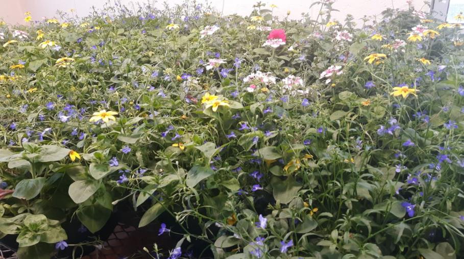 Landscape Ecology Sells Plants